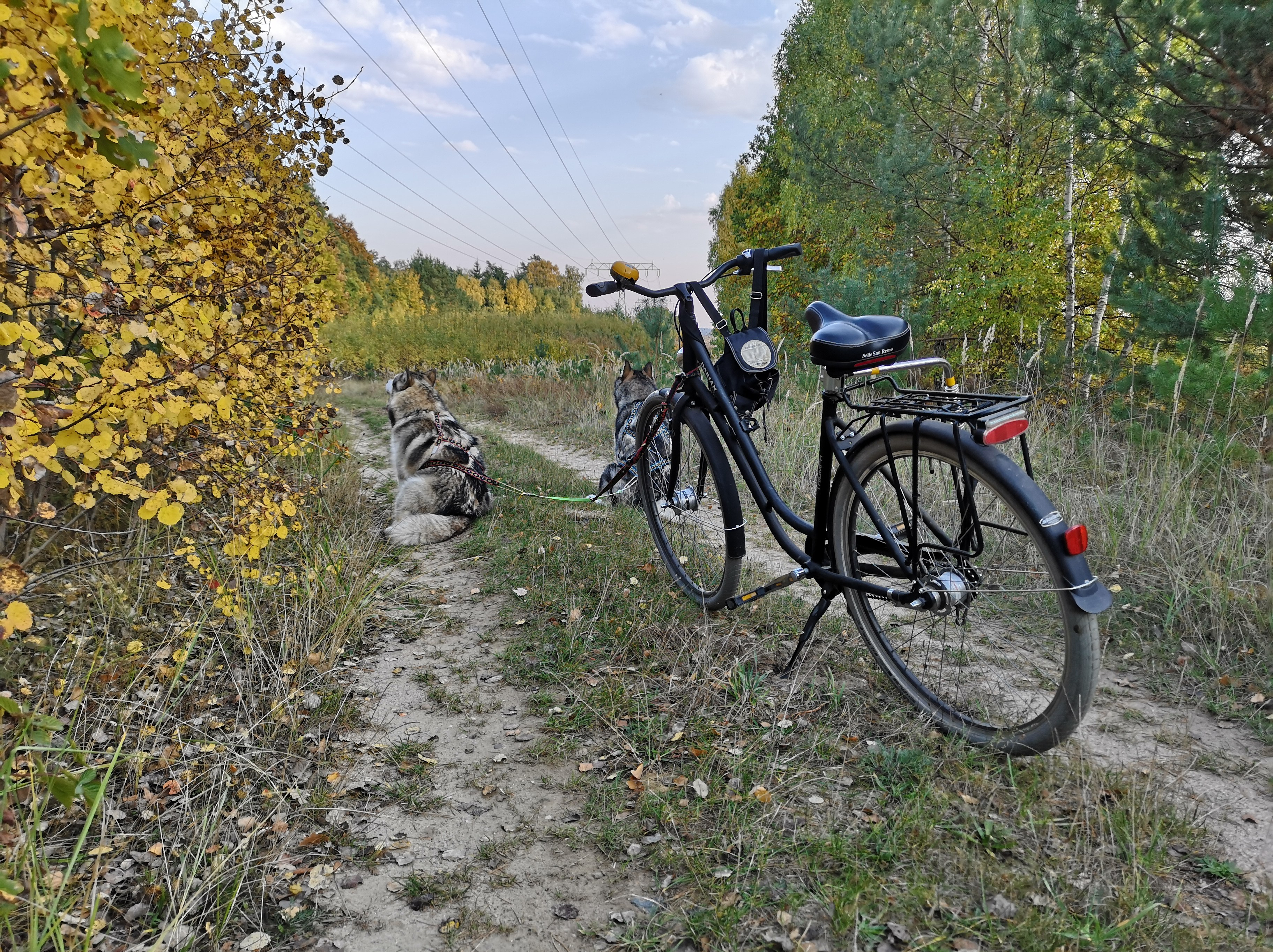 Bikejöring Fahrrad mit Hund