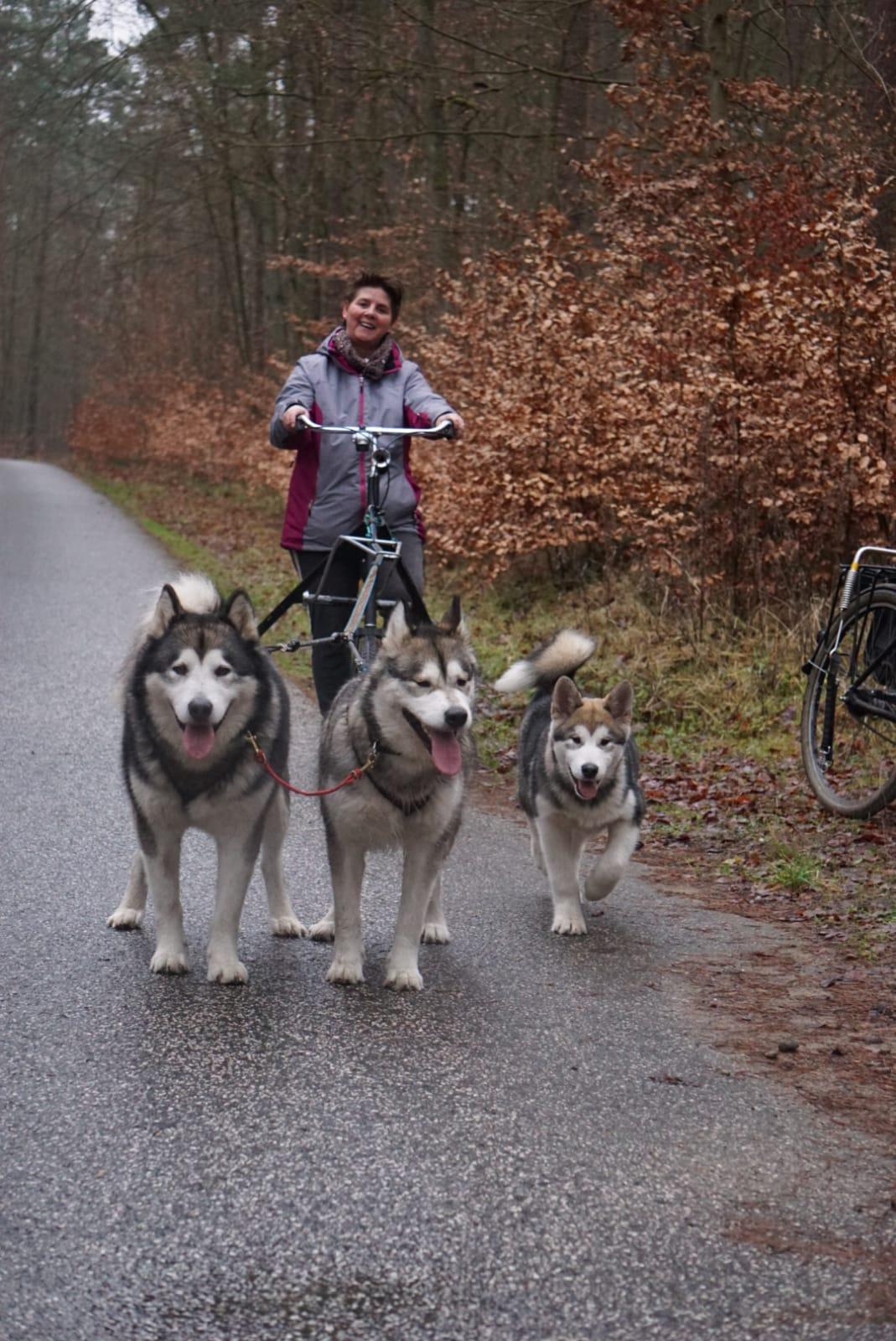 Trike Zughundesport